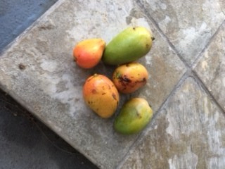 Tasty Hawaiian Mangos